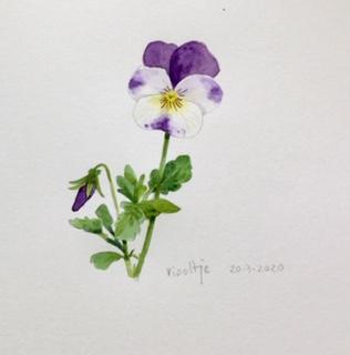Annette Fienieg: Violet 20-3-2020