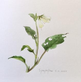 Annette Fienieg: Symphytum