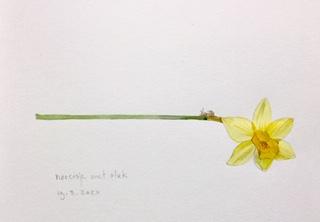 Annette Fienieg: Narcisje met slak 19-3-2020