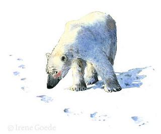 Irene Goede; Polar bear