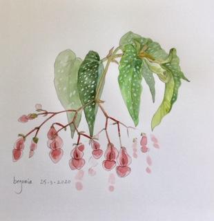 Begonia, Annette Fienieg 2020