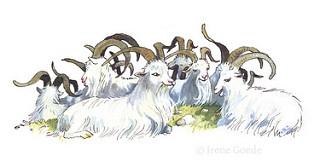 Irene Goede; Goats