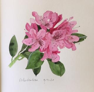 Annette Fienieg: Rododendron 9-4-2020