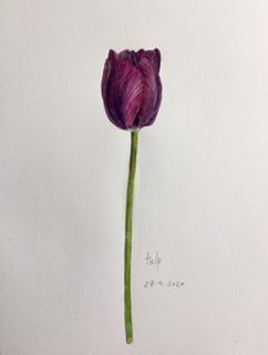 Annette Fienieg: Tulip 28-4-2020