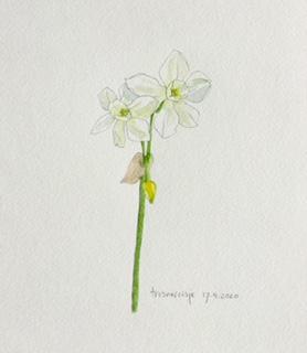 Annette Fienieg: Narcissus 17-4-2020