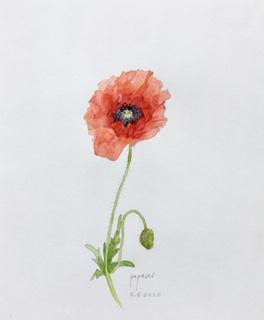 Annette Fienieg: Poppy