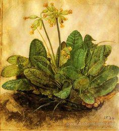 Albrecht Dürer: primrose