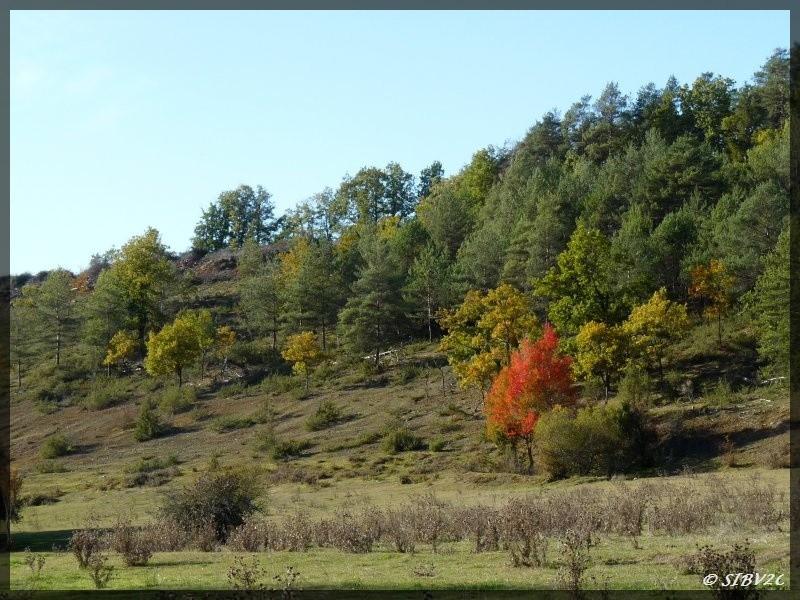 C'est l'automne ! Photo de la vallée du Verdançon, petit cours d'eau qui traverse le village de Saint Laurent des Bâtons sur le territoire du syndicat de la Louyre, partenaire du SIBV Couze et Couzeau.
