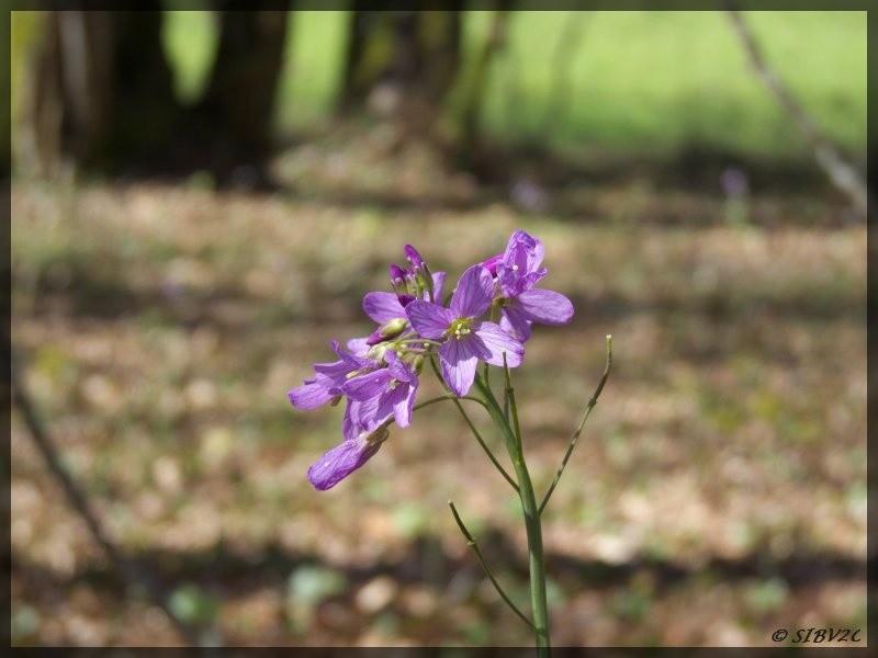 Une fleur de sous bois inconnue (mais peut être la connaissez vous ?) photographiée dans la vallée de la Vouludre. Intéressante car parfaitement isolée et donc facile à mettre en valeur sur la photo.