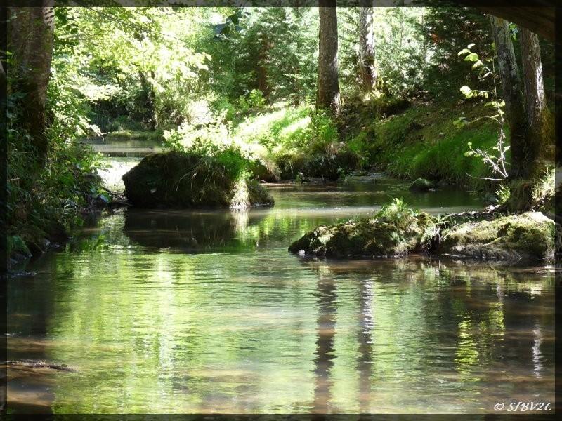 """Ces blocs de pierres sont des aménagements piscicoles. Leur positionnement en quinconce crée des zones de refuges et contribue à diversifier les habitats piscicoles et les écoulements.  Les espèces aquatiques ont besoin de milieux variés, des secteurs """"to"""