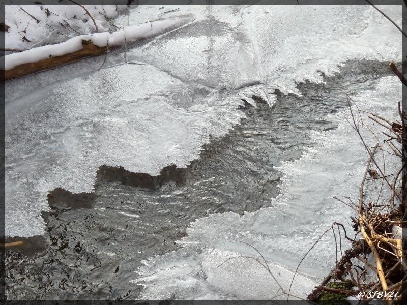Février 2012, la glace se referme sur la Véronne, mais seule la surface est gélée et le ruisseau cours sous la glace.