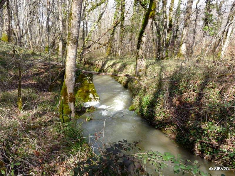 """La Vouludre """"sauvage"""" (affluent de la Couze) sur la commune de Sainte Croix"""
