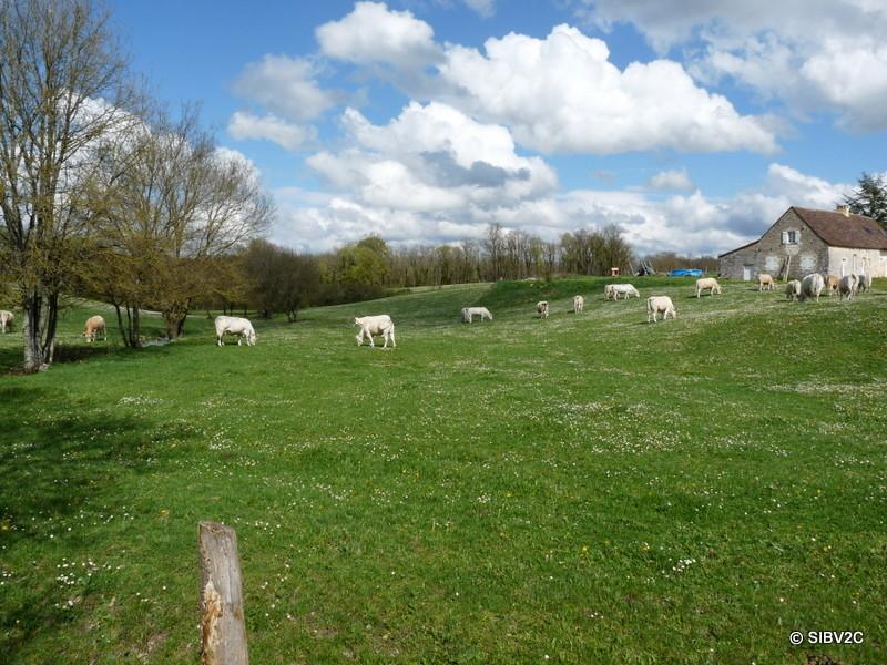 Paysage de la vallée du Couzeau