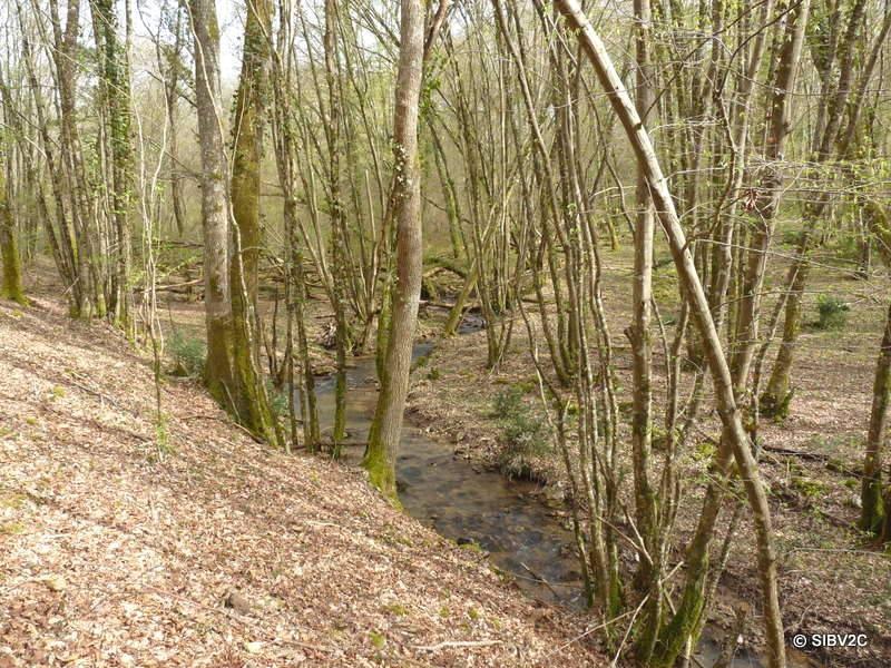 Le Ségurel traversant la forêt de la Bessède sur la commune de Bouillac