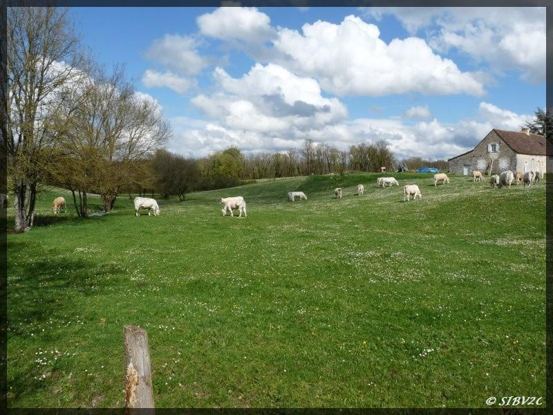 L'amont de la vallée du Couzeau sur la commune Naussannes au printemps. L'écoulement du Couzeau est intermitent à ce niveau.