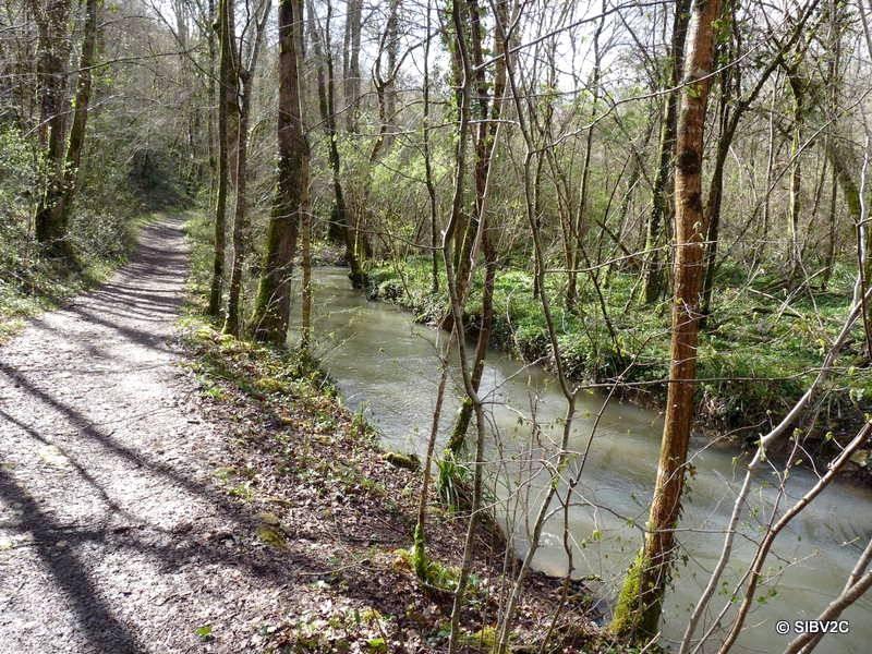 Le Couzeau traverse des zones forestières naturelles