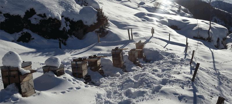 ruches warré sous la neige