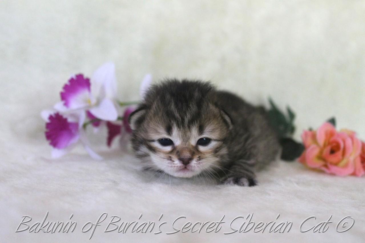 Bakunin 2 weeks old
