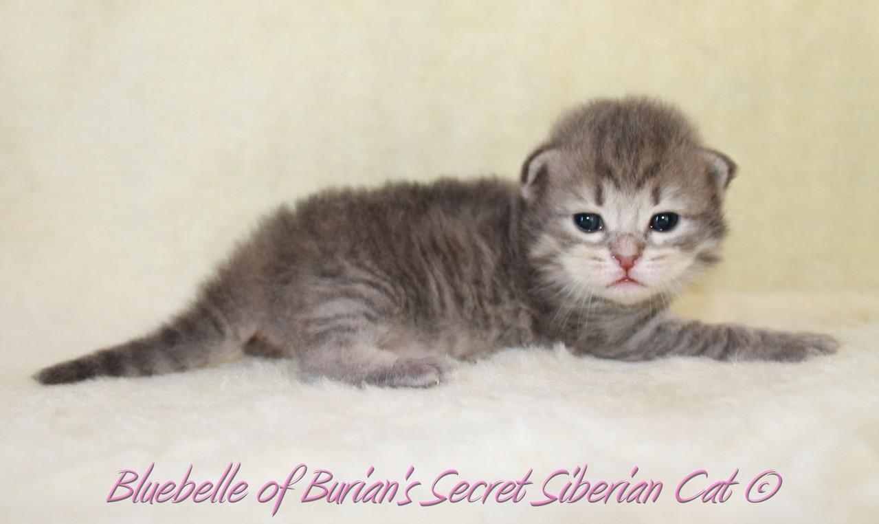 Bluebelle 2 weeks old