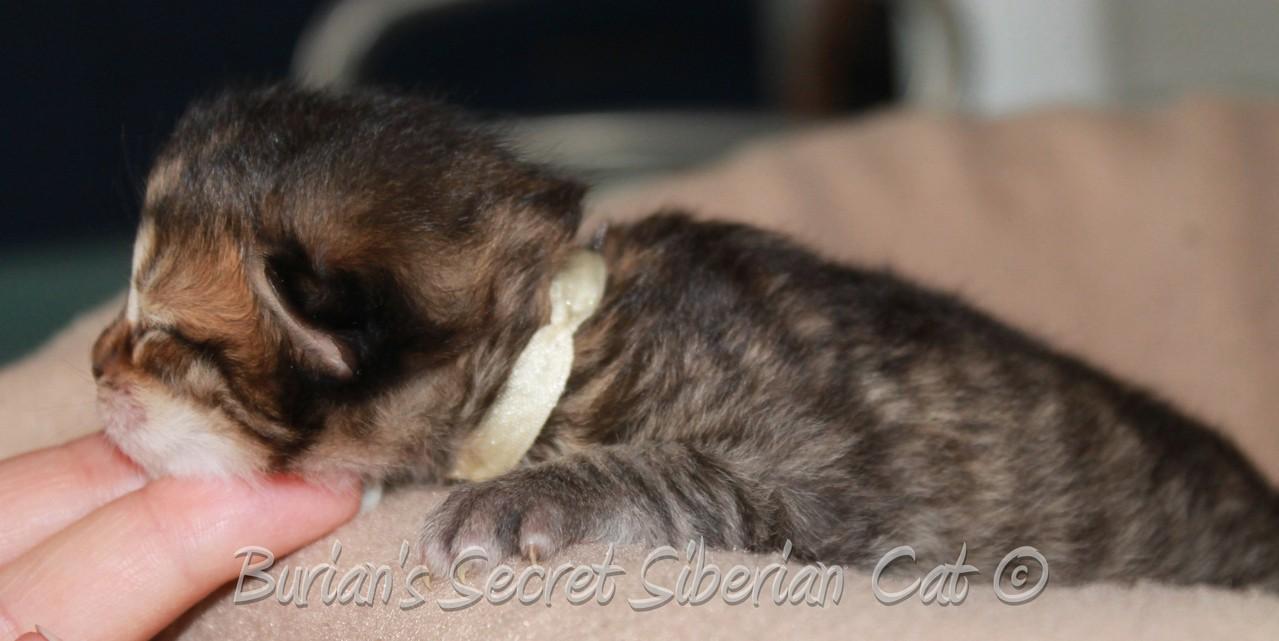 Bismark 9 days old