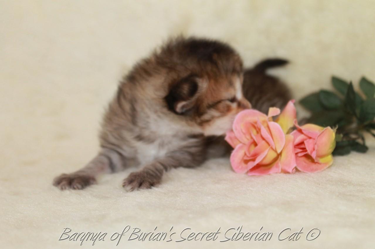 Barynya 2 weeks old
