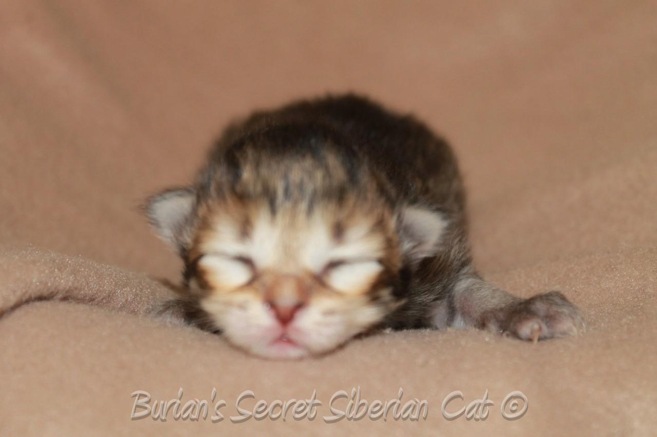Barynya 9 days old