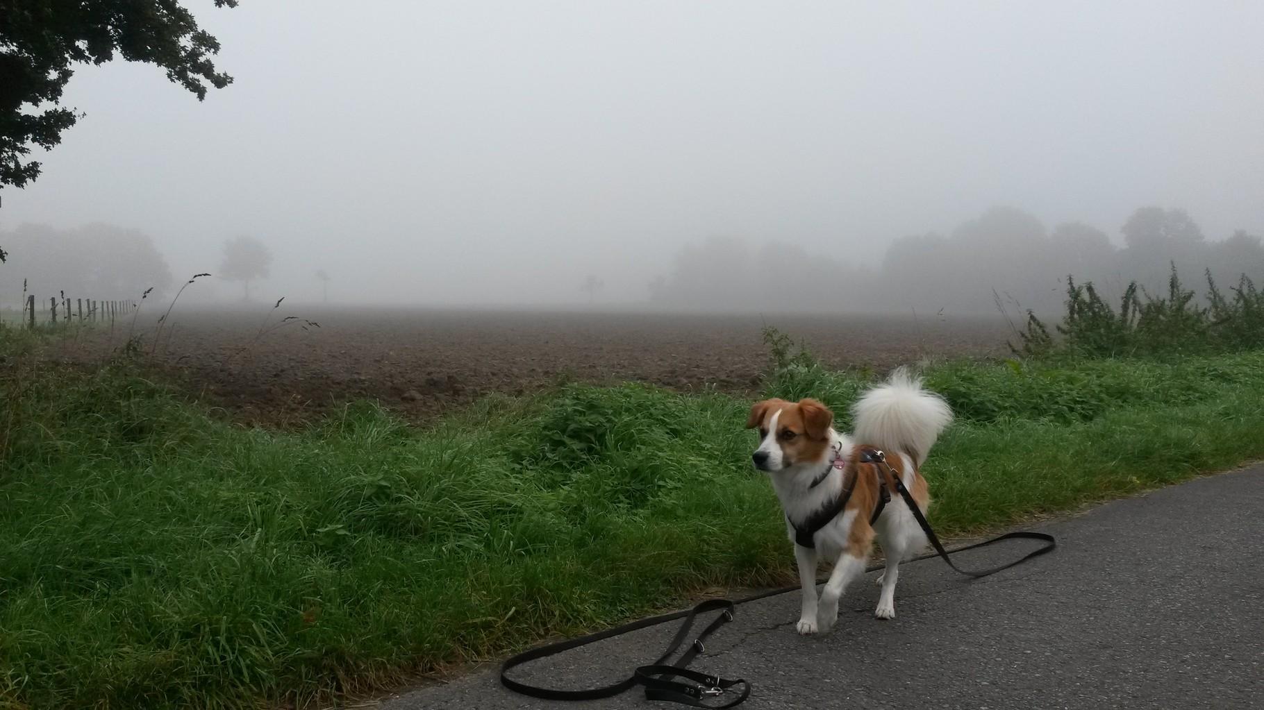 herbstlicher Spaziergang