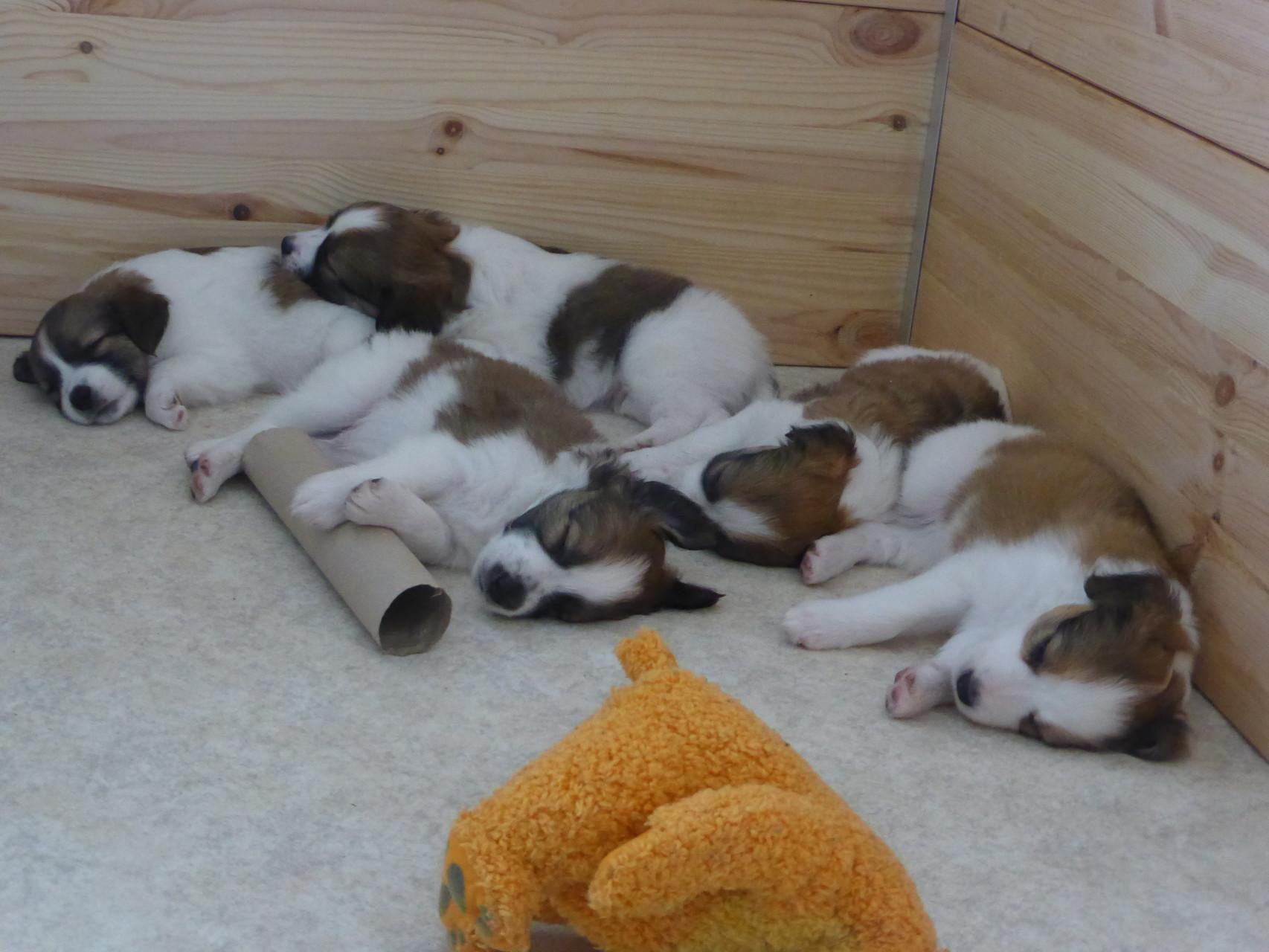alle schlafen ein.