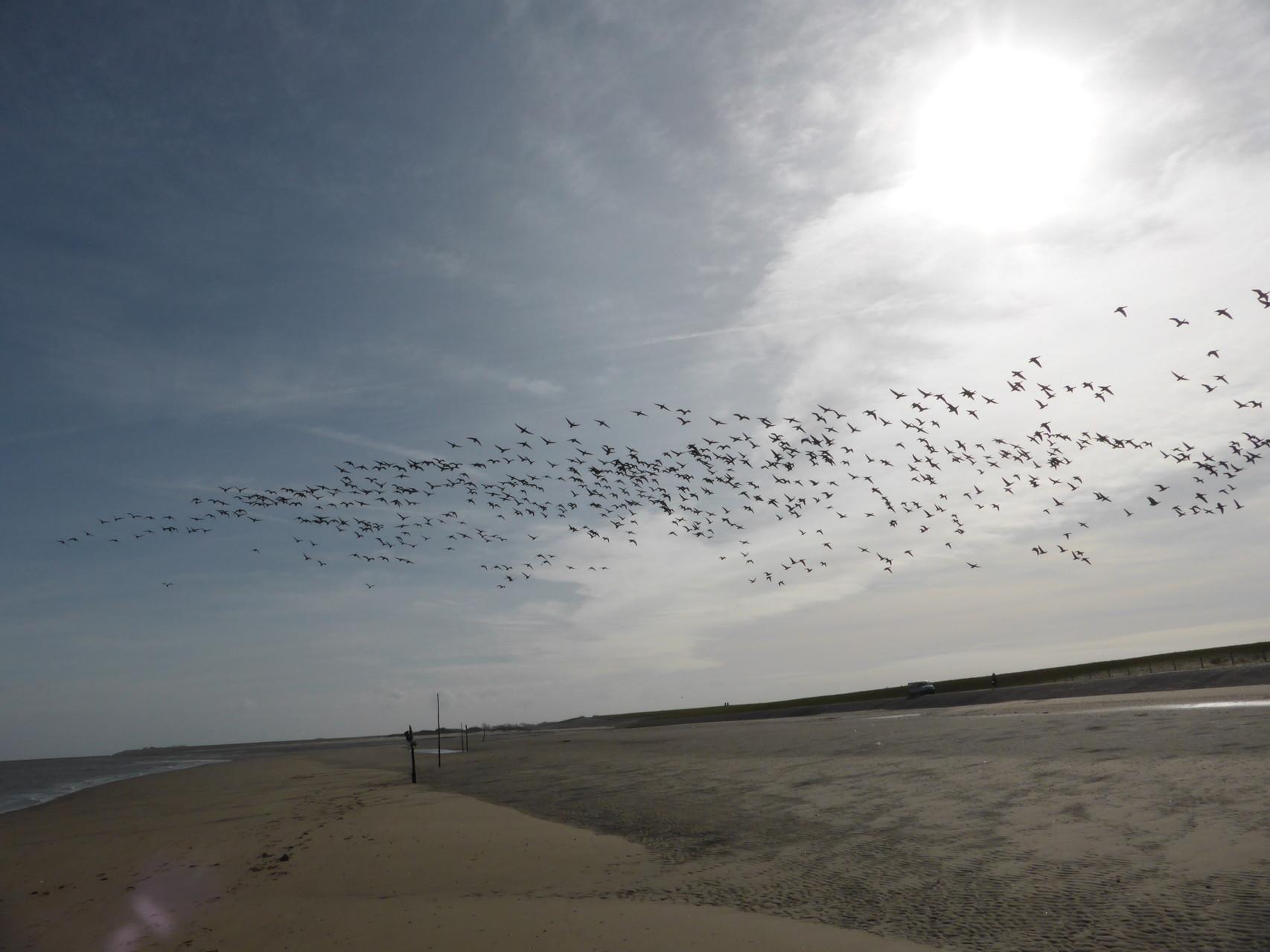 eine Vogelwolke