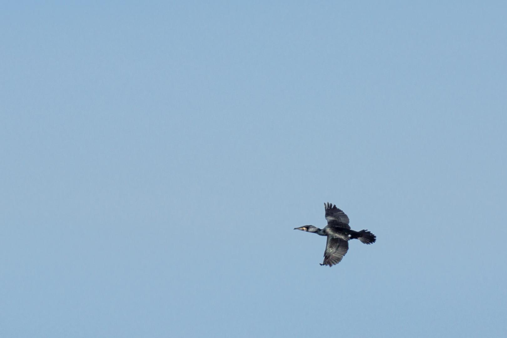 ein fliegender Kromaran