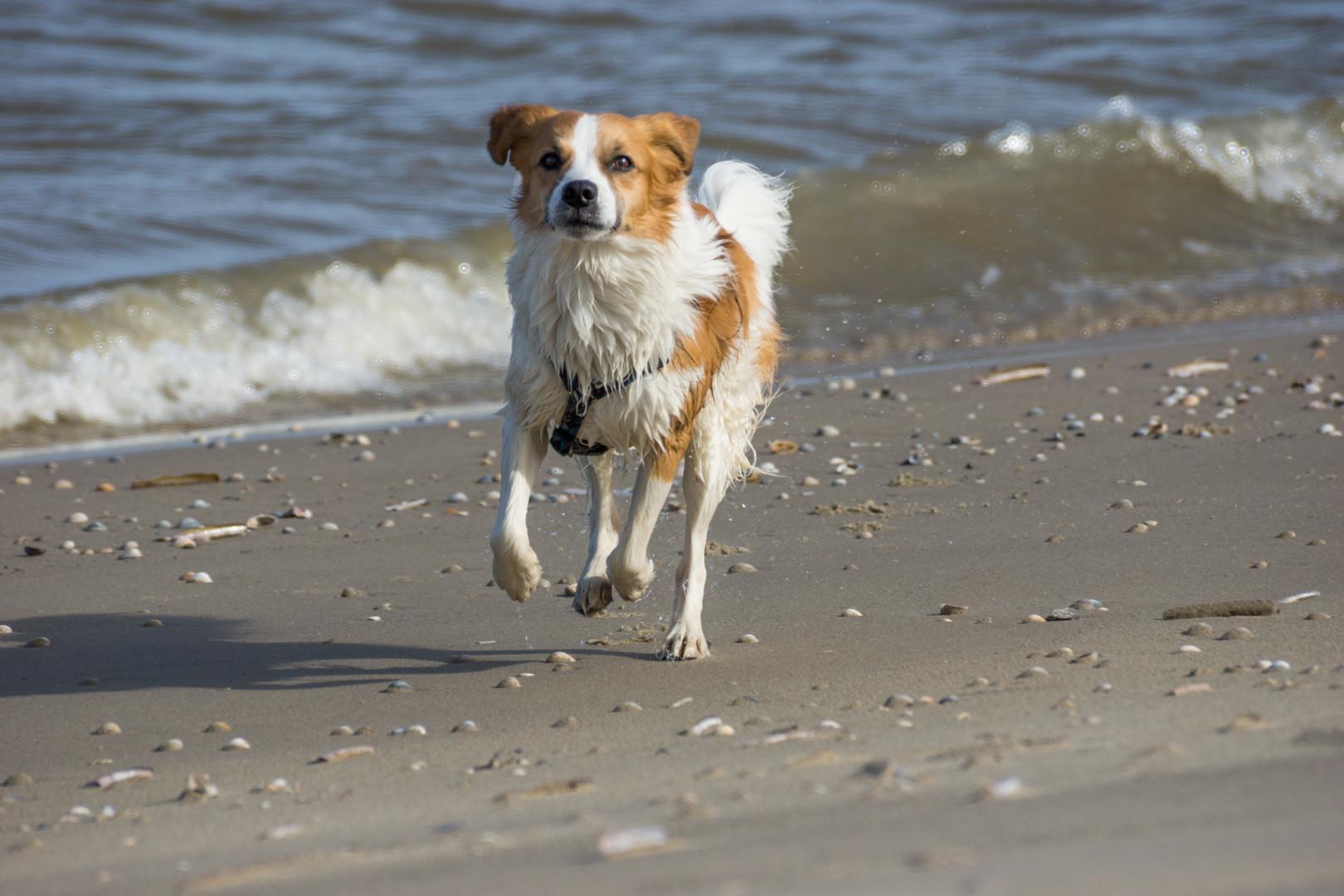 am Strand ist es toll!