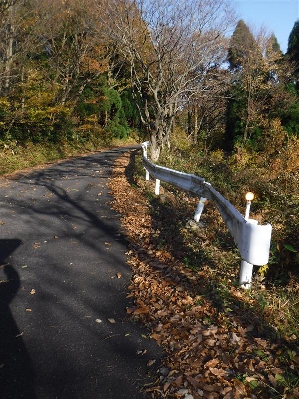 道路の端に落ち葉がたまっています。