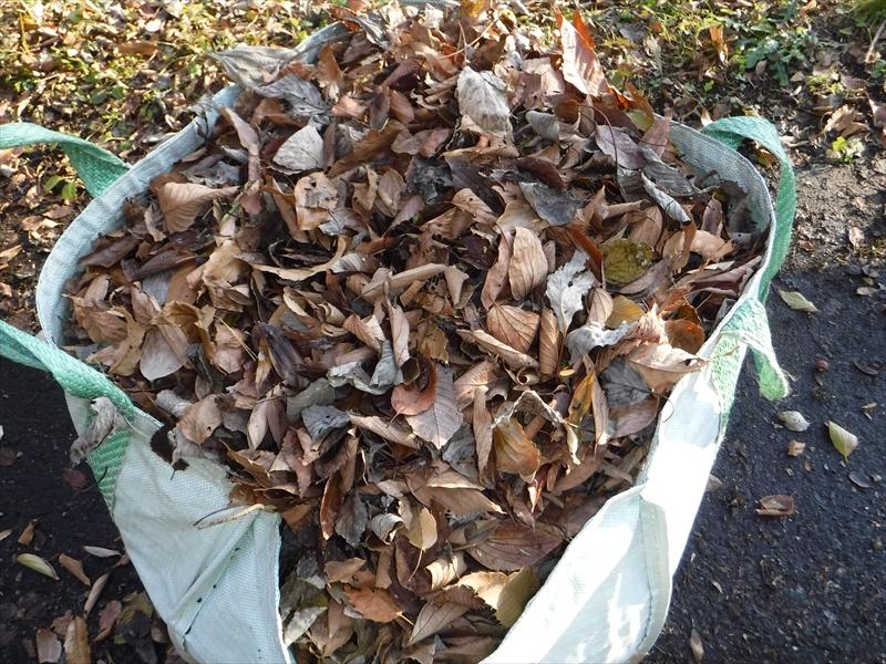 落ち葉をダストフーに詰め込みます。