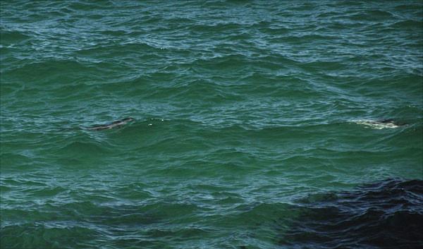 zwei Delphine!