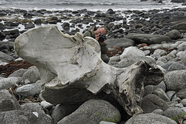 Walknochen bei Eggum am Strand