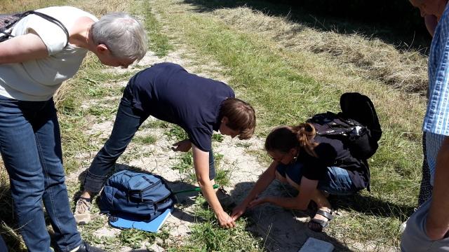 Auf der Suche nach Ameisenlöwen... Bild: Claudia Rüther