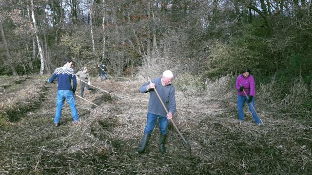 Mit Harken wurde das Mahdgut auf der Fläche zusammen gerecht (Foto: Thomas Hövelmann)