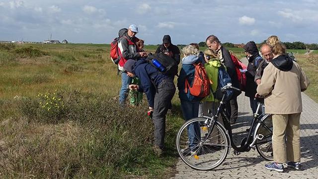 Bei längeren Exkursionen stellte AG-Leiter Dr. Thomas Hövelmann (links) typische Pflanzenarten der Nordsee-Küste vor (Foto: Karin Parpin)