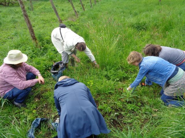 Auf kleinen Probeflächen wurde in Handarbeit der Auswuchs entfernt, um offene Bodenstellen für Bienen zu schaffen
