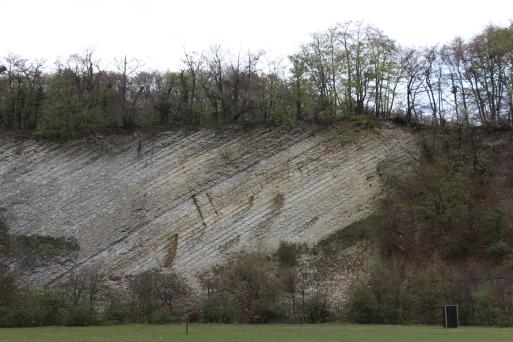 Geologischer Aufschluss am Hundeübungsplatz Lengerich Bild: Thomas Hövelmann