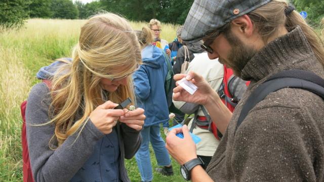 Mit der Lupe konnten Details der Bestäubung entdeckt werden (Foto: Sophia Närmann)