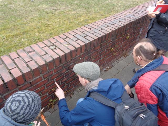 Die AG Botanik inspizierte die Mauer mit seltenen Farnen in Heessen (Foto: Thomas Hövelmann)