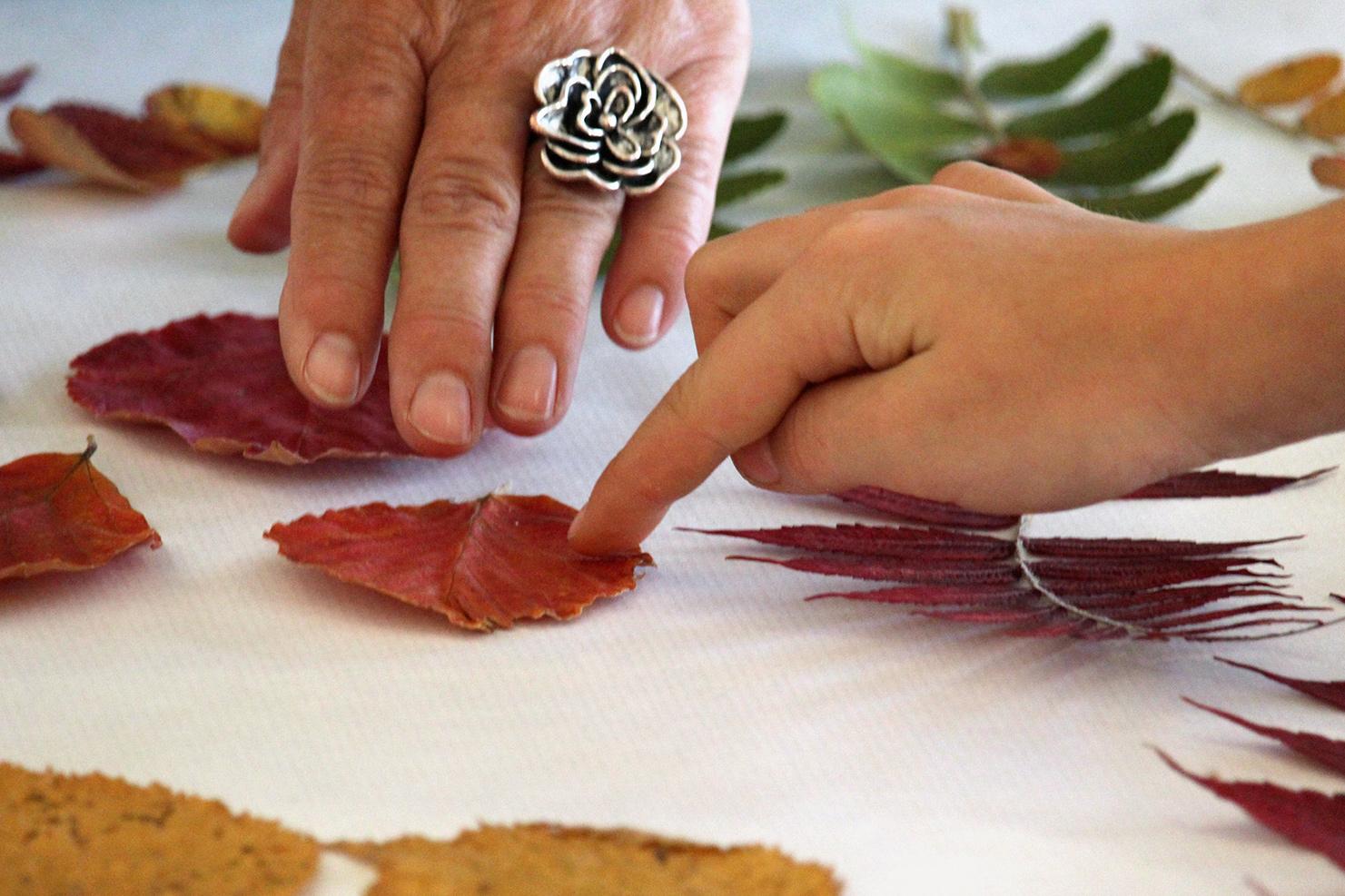 blätter im herbst – hamamelisblatt