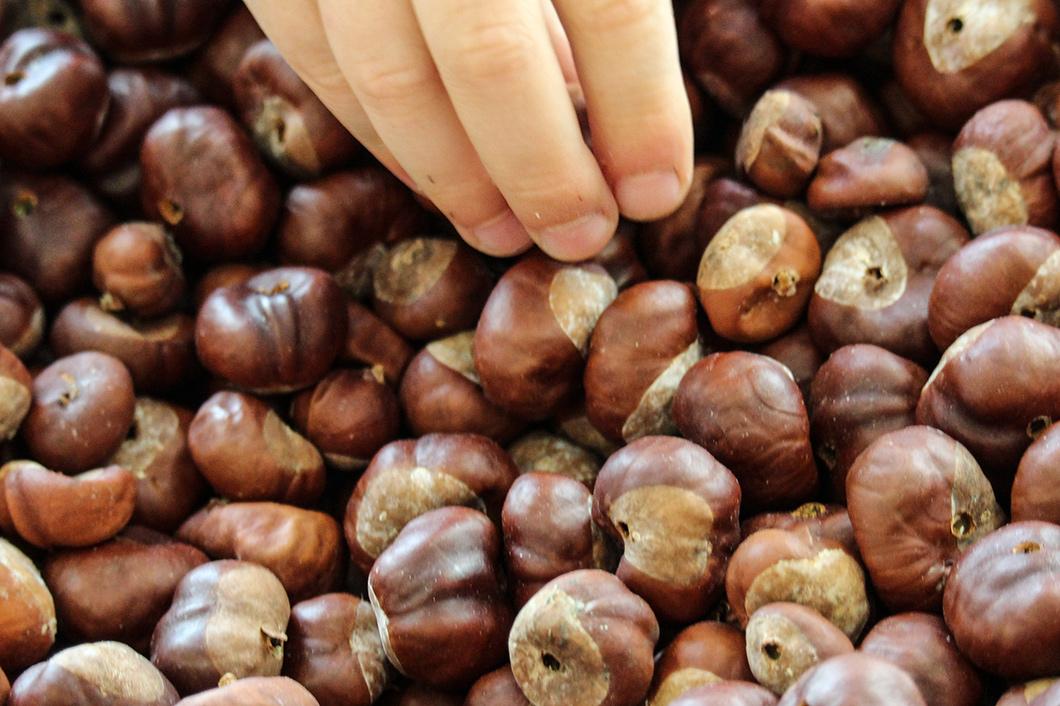Kastanien – ein hervorragendes naturbastelmaterial