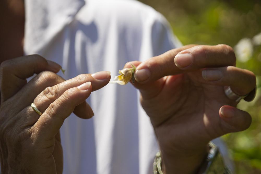 eine blüte des wolligen fingerhutes – so als würde sie uns die zunge zeigen