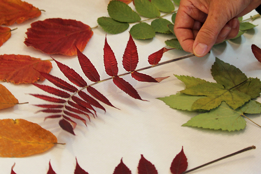 sumach-essigbaumblatt