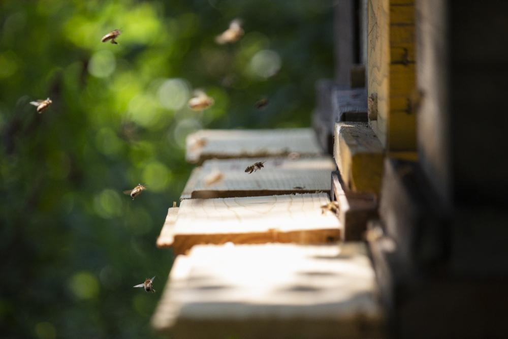 bienenstöcke – was würden wir nur ohne bienen machen?