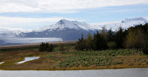 """Kleine angelegte """"Wäldchen"""" sind eine Rarität auf Island…"""