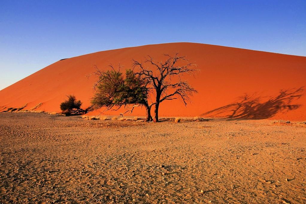 DUNE AFRICANE  - NAMIBIA -