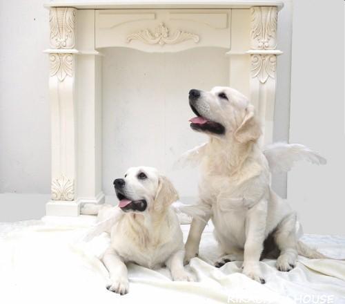 ブリーダー ゴールデン レトリバー みんなの犬図鑑